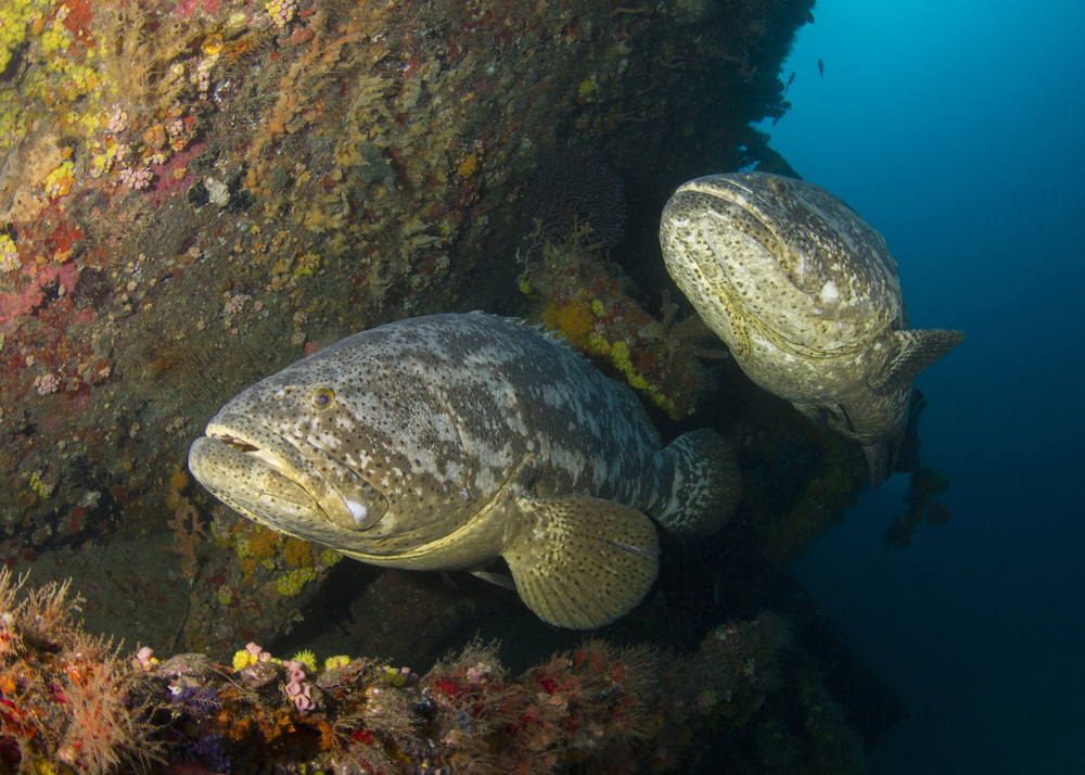 Reef Smart begins development of Palm Beach County dive and snorkel guides
